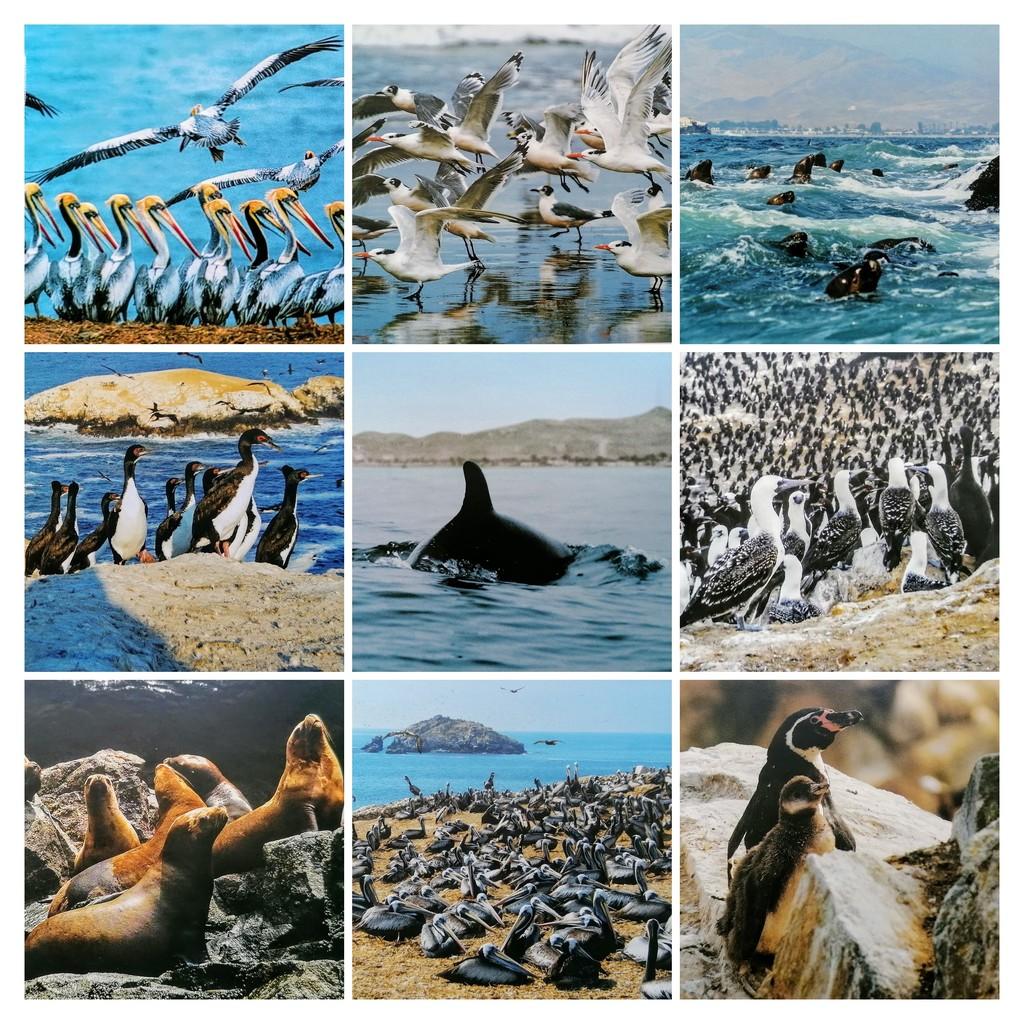 01 Biodiversitate Marină