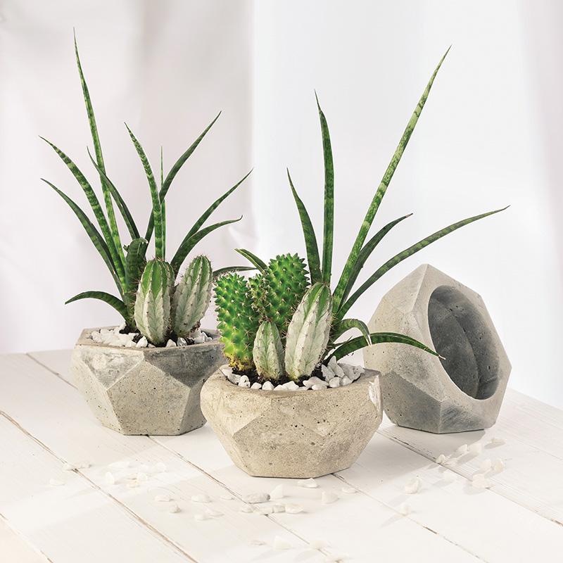 04_ghiveci-geo-cactusi-_cristian-vasile