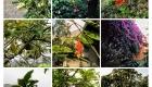 12 Plante și Fructe pe Domeniul Braedt de la Cieneguilla