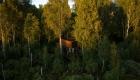 Maidla_Nature_Resort_2