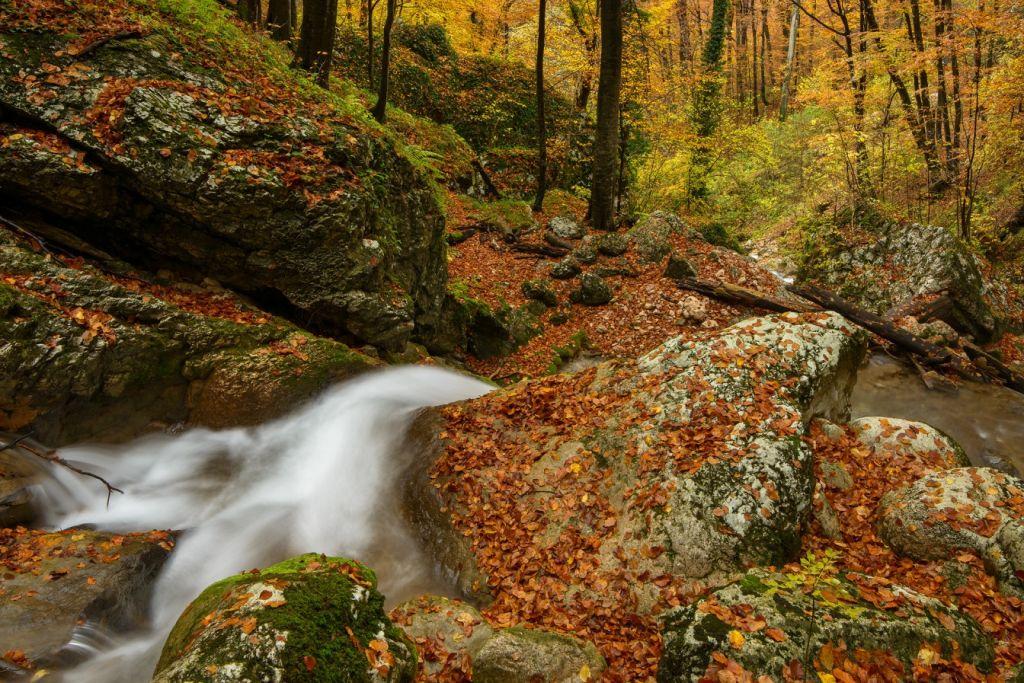 Parcul Natural Grădiștea Muncelului-Cioclovina - decor în România Sălbatică