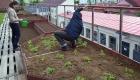 Agricultură urbană. Un pas important către comunități sustenabile