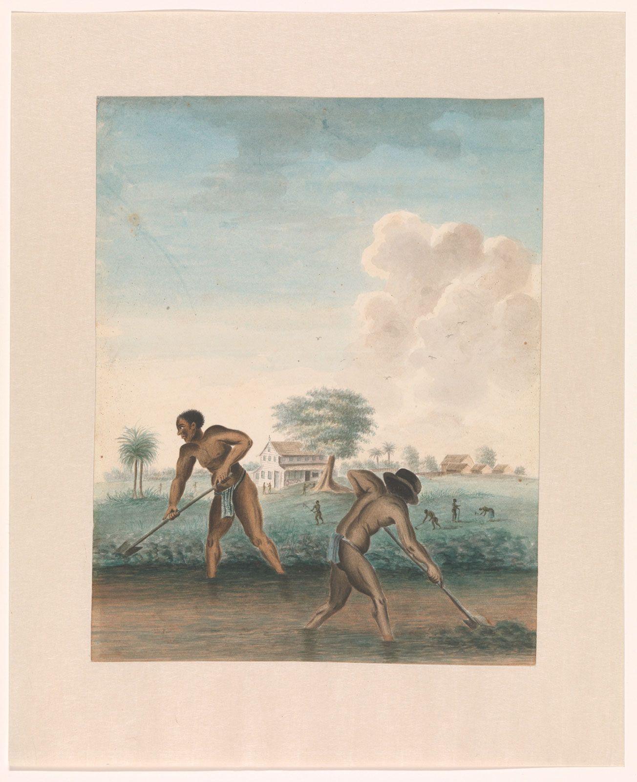 Sclavi muncind pe câmp (circa 1850), autor necunoscut (Rijksmuseum)